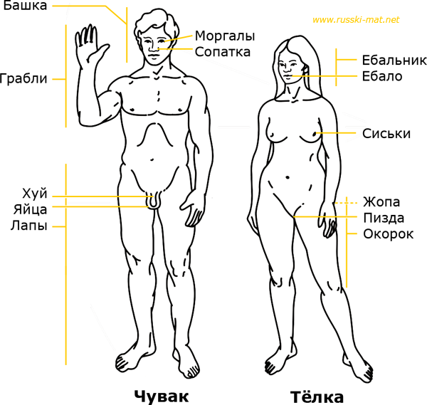 Body parts in Russian