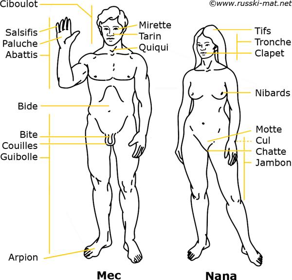 названия частей тело в арго